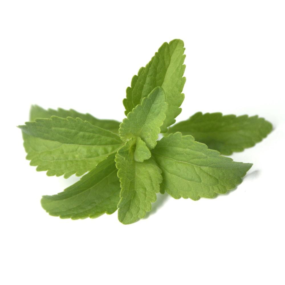 Blätter der Stevia-Pflanze