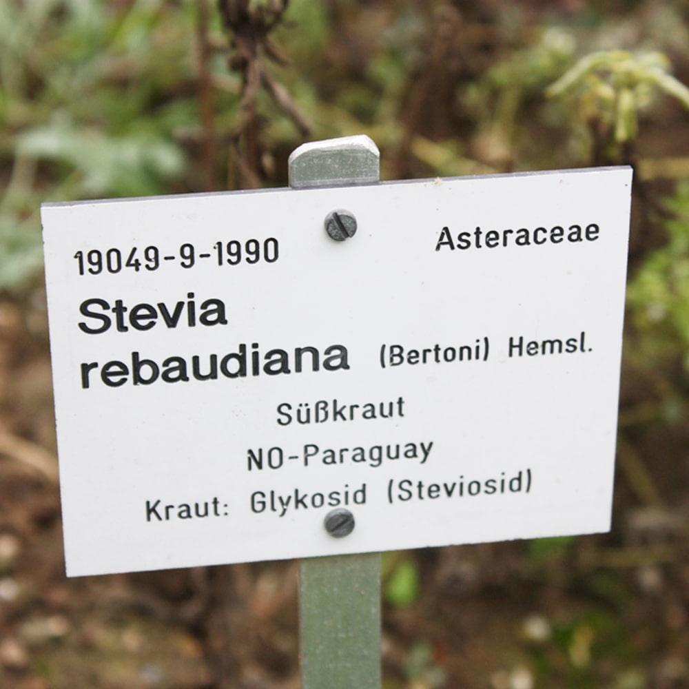 Die Pflanze Stevia rebaudiana